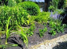 Planted: Phlox 'Bright Eyes', Aster ageratoides 'Asran', Anemone hupehensis Honerine Jobert + Serenade and Hemerocallis 'Sammy Russell ' !