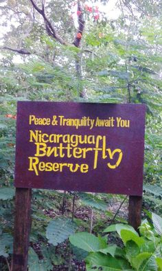 Reserva de Mariposas de Nicaragua (Nicargua Butterfly Reserve) is a butterfly reserve just outside the city of Granada, #Nicaragua, where you can view a variety of butterflies in nature, learn about these lovely creatures, or explore the surrounding walking trails