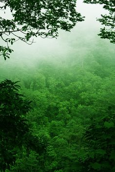 Costa Rica Rainforest by The One and Only Jet Guer, via Flickr