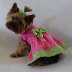 A yorkie in a pink and green dress?! Does it get much cuter?