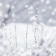 Winter Snow  - Tap to see more breathtaking Winter snow flowers wallpapers! | @mobile9