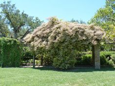 Pergola Climbing Plants – Easy-care Plants And Vines For Pergola Structures