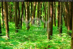 http://image.yaymicro.com/rz_1210x1210/0/248/summer-forest-248a21.jpg