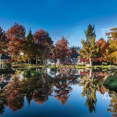 When a garden looks so amazing in both autumn and spring there's nothing else to do but shoot it twice - here it is in all its golden glory #nzhouseandgarden #autumn #garden #lake