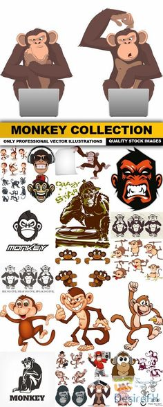 Monkey Collection - 25 Vector
