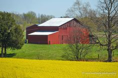 Canola Fields and Red Barn, Portland, TN