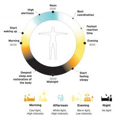 The position paper on human-centric lighting describes the natural cycle of light effects on the human body's internal clock, and gives examples of how to mimic that cycle with electric light.