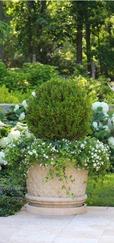 green & white landscaping Evergreen Planters, Evergreen Container, Container Plants, Container Gardening, Flower Containers, Moon Garden, Dream Garden, Back Gardens, Outdoor Gardens