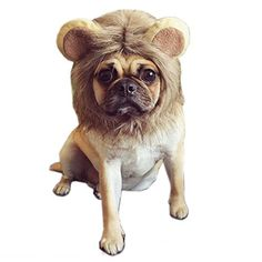 Alfie Pet by Petoga Couture  Glaw Lion Mane Wig Costume for Dogs and Cats  Size Small * You can find more details by visiting the image link.Note:It is affiliate link to Amazon.