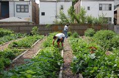 GARDEN HOUSE IDEAS: How to Build a Backyard Vegetable Garden