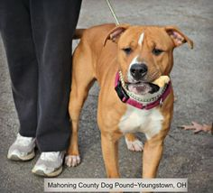 JAX...FOUND IN YOUNGSTOWN, OHIO...NOW ADOPTABLE!!! https://www.petfinder.com/petdetail/30807494/