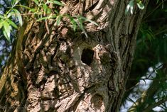 Spot the Nuthatch, can you see it? #nuthatch #camouflage #birds