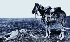 Poignant vigil: A cavalry horse stands over the body of its rider - from the book The War Horses, which shows the reality behind the animals forgotten in World War I World War One, First World, Horse Love, History Facts, Four Legged, Beautiful Horses, Old Photos, War Horses, Creatures