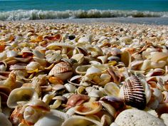 Bowman's Beach on Sanibel Island is one great beach for shelling on an island known for its shell-filled beaches.