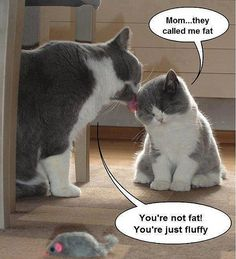 Poor insecure kitty. I love you kitty. :)