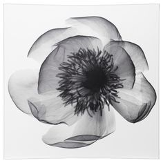Picture, X-ray of peony - Ikea