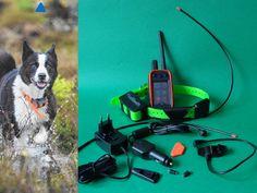 Alpha 100 Z Garmin Tt 15 (Śledzenie + Sygnalizacja Świetlna + Wibracja, Dźwięk, Stymulacja), Dla psów myśliwskich Garmin z GPS…