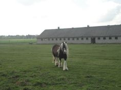 Horses in Templin, Brandenburg, Germany
