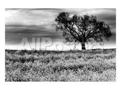 Tree in a Field, Severville, Tennessee by Shane Settle Landscapes Art Print - 30 x 23 cm