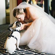 French Bulldog❤️ at the Wedding More