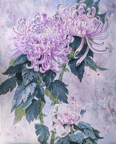 http://fineartamerica.com/featured/japanese-chrysanthemum-series-part-1-winter-irina-effa.html
