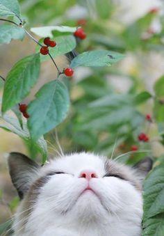 A beautiful cat Pretty Cats, Beautiful Cats, Animals Beautiful, Cute Kittens, Cats And Kittens, I Love Cats, Crazy Cats, Cute Baby Animals, Animals And Pets