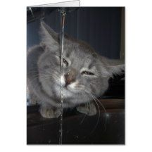 Accused_Cat,_Found_(Guilty),_ Greeting Card