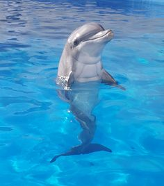 They call him Flipper, Flipper-- Faster than lightning. Rare Animals, Cute Baby Animals, Strange Animals, Bottlenose Dolphin, Humpback Whale, Dolphin Photos, Baby Dolphins, Underwater Animals, Delphine