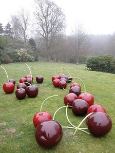 Oh my gosh:  giant cherries for the garden.  They are so delightful.