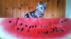 the big watermelon