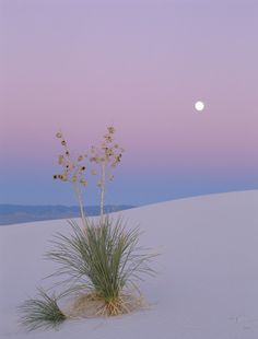 Pastel moon...I so want to be right in the middle of a scene exactly like this one!