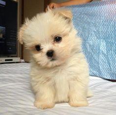 Las 30 fotos de cachorros de perro más votadas en Facebook | Mascotas