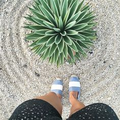 Circles, stripes and endless summer! #soludos #soludossummer #succulents #summerstyle