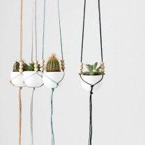 Terug van weggeweest: de cactus Roomed | roomed.nl
