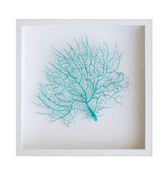 aqua blue framed coral