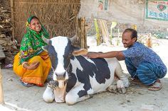 In Bangladesh, Heifer is equipping farmers like Runa Laila (left) with the skills and tools to meet the country's demand for fresh dairy. Read more in the World Ark Magazine's feature Dairying Greatly in Bangladesh.