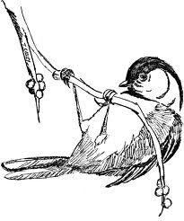 Chickadee Coloring Sheet For The More Adventurous Birder