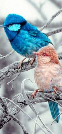 Exotic Birds, Colorful Birds, Beautiful Birds, Animals Beautiful, All Birds, Bird Design, Cutest Animals, Birds, Animales