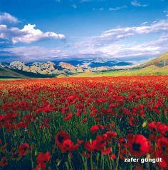 Artvin ⚓ Eastern Blacksea Region of Turkey #karadeniz #doğukaradeniz #artvin