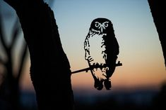 Add a bird silhouettes from Metalbird to your own landscape or give on as a gift. View the collection and get one today. Chatham Islands, Owl Who, Wood Pigeon, Flax Flowers, Forest Habitat, Misty Eyes, Weathering Steel, Sing Out, Metal Garden Art