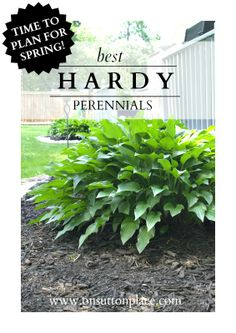 Tried and true hardy #perennials | The DIY Gardener's Guide. @O N Sutton Place