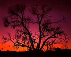 Last Light- Loved Working for this amazing artist!!!! Rodney Lough Jr
