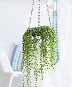 Charming Hanging Plants ideas to Brighten Your Patio – Gardening Decor Cool Plants, Green Plants, Tropical Plants, Indoor Garden, Indoor Plants, Balcony Hanging Plants, Decoration Plante, Plants Are Friends, Succulent Gardening