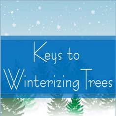 As winter's grip tightens across the nation, there are a few things we can do to help our trees. Check out this week's episode of Trees Are Key to find out how to help your trees survive the cold.  Species Spotlight: Citrus is one of winter's sweet surprises. Have you tried to grow your own citrus tree, but it was too cold where you live? Check out this week's tree of the week – 'Arctic Frost' satsuma, a Texas SuperStar®.