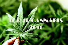 Top 10 Studies Of 2016 Indicating Cannabis's Safety and Efficacy