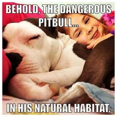 Pitbulls are so lovable!
