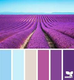 Purples, and, blue
