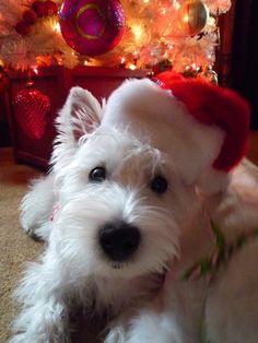 Lucy - Christmas 2012