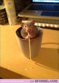 "Remy (from ""Ratatouille""), IS THAT YOU? #funny #cartoon #disney #pixar"