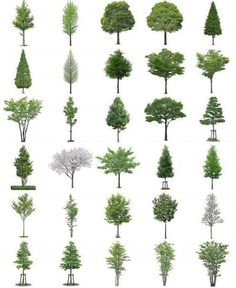 Photoshop Tree and Bush Files section render Architecture Graphics, Architecture Drawings, Landscape Architecture, Landscape Design, Planer Layout, Landscape Drawings, Parcs, Photomontage, Trees To Plant